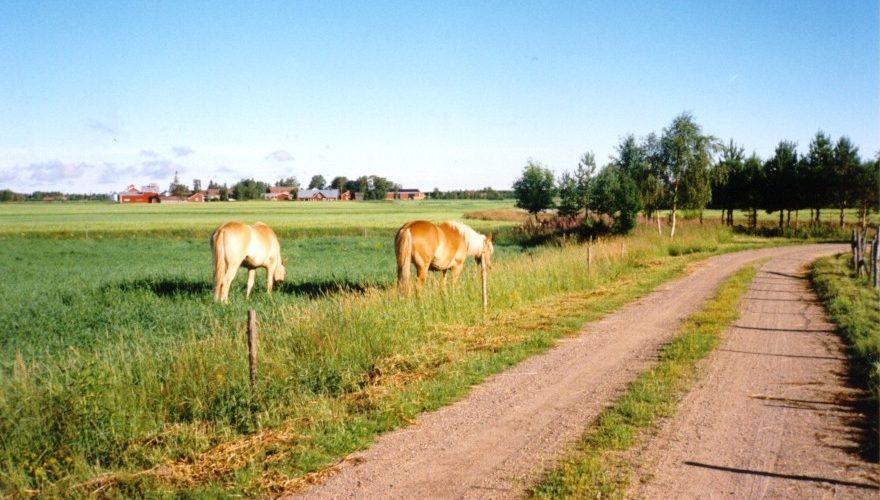 hevosia tienvieressä laitumella