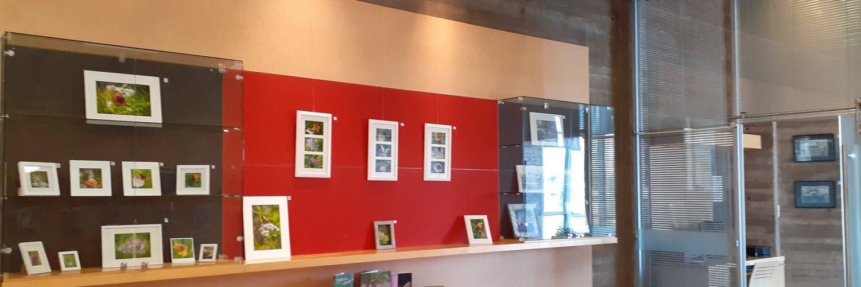 Kirjasto näyttelytilat